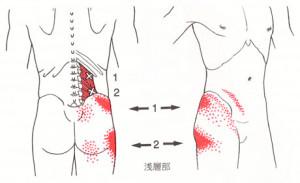 腰から臀部への影響