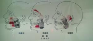 顎まわりの筋肉