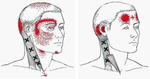 目の周りへ影響する筋肉